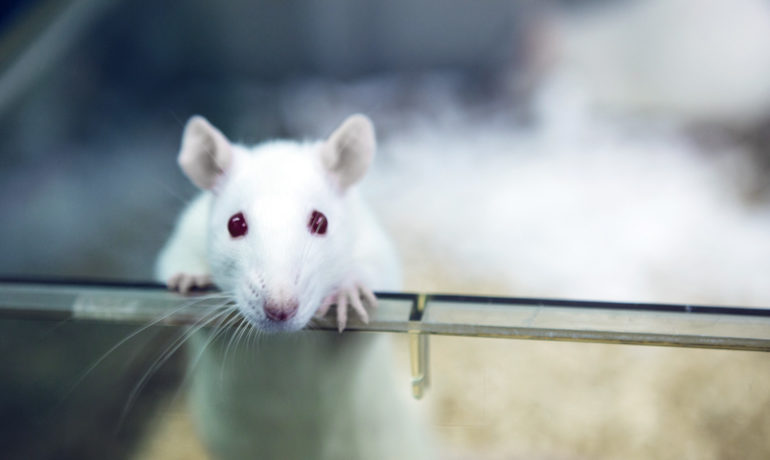 Does long-term androgen deficiency lead to metabolic syndrome in middle-aged rats?